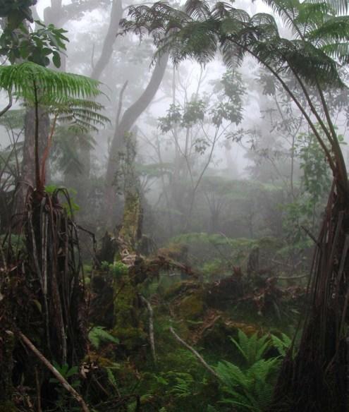 Forest-WKOP-Portrait
