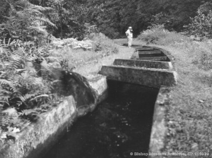 Hamakua Ditch in Waipio Valley , Hawaii , Geoffrey C. Davies in distance-BM