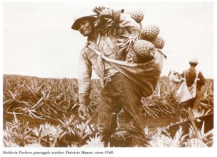 Harvesting pineapples in Hawaii-(NYTimes)-around 1940