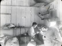 Homes Dill (rear) preparing bird skins with Student Clarence Albrecht-Laysan-1911