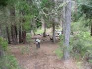 HosmerGrove_hiking_trails-maui