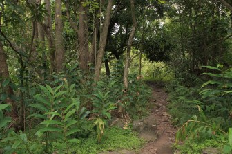 Iao_Valley_forest_trail