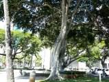 Irwin-Park