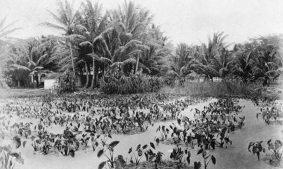 Kakaako-Prior to the 20th century Ward Village was primarily fish ponds, salt pans and taro lo'i-(avisionforward)