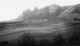 Kalalea Mountain Range, pineapples fields 1941-KauaiMuseum