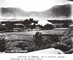 Kaneohe Rice Mill-1913