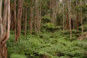 Protecting a Forest, Preserving a Culture