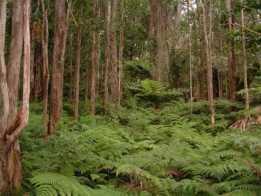 Kapapala-forest-hfia