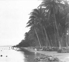 Kapuaiwa_Grove,_Kaunakakai,_Molokai