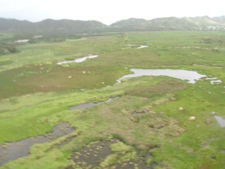 Kawainui-general_area_for_waterbird_habitat_restoration_Forest-Kim-Starr