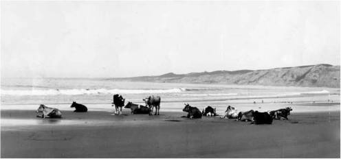 Lajolla-1906 (the same in late-1880s)
