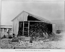 Laysan-Island-1911-(DenverMuseum)