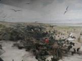 Laysan Island Cyclorama-Great Frigatebirds Nesting-UIowa