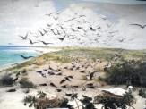Laysan Island Cyclorama-Terns on Laysan-UIowa