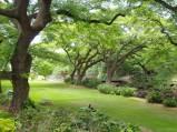 Lili'uokalani_Botanical_Garden