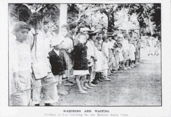 Malihini Tree -PCA-Dec_28,_1910