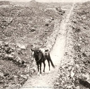 Mamalahoa_Trail_as_horse_trail-1900s-(HMCS-NPS)