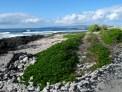 Maui_Alaloa