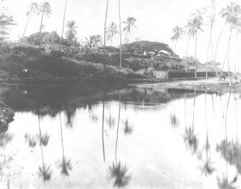 Napoopoo Pond-Lualiiloa Pond-DLNR