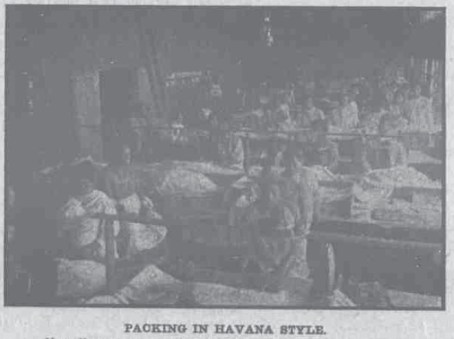 Packing the Havana Style-HawaiianGazette-07-25-1911