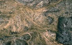 Peles_Hair_USGS