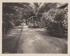 Pierpoint-walk way-Atkins