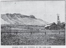 Pond Farm-Milking Shed-Diamond Head-Adv-June 4, 1905