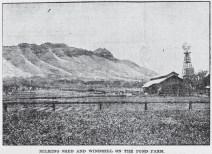 Pond Farm-Milking Shed-Diamond Head-Adv-June 4, 1905