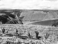 Portable sugar cane flumes in field near Kukuihaele, Hawaii, looking toward Waipio-BM