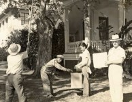 President Arthur Hauck with several grounds employees, harvesting tamarind pods during the 1920s-Punahou