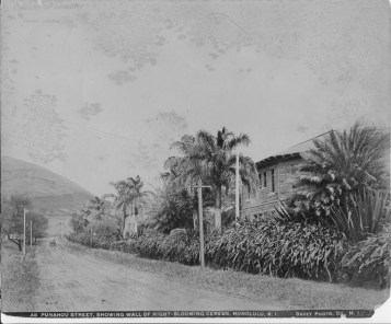Punahou-Street-looking-toward-Round-Top.-Pauahi-Hall-at-Punahou-School-on-right.-Night-blooming-cereus-growing-on-wall-HSA-PPWD-17-3-027-1900