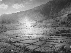 Punaluu_Oahu-Loi_Kalo-BM-1924