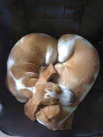 Puppu-heart