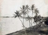 Railroad along Pearl Harbor-1890
