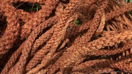 Rope from coconut husks