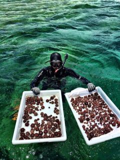Sea Urchins-SuperSucker