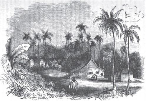 St Cross Seminary-The Net-1877
