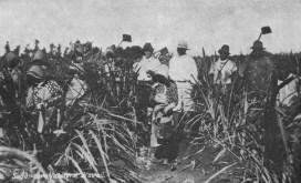 Sugar_Cane-Workers-Puerto_Ricans-Souza
