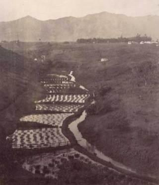Taro patches near Lihue, Kauai-Mitchell-BishopMuseum-ca. 1886.
