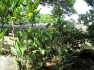 Ti leaf and heiau