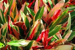 Ti-red-green