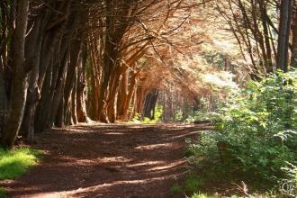 Waihou_Spring Trail
