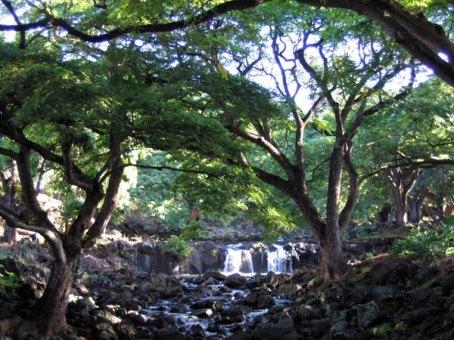 Waikahalulu_Falls-HonoluluBotanicalGardens