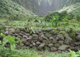 Wailau-terraces_walls (Windy K McElroy)