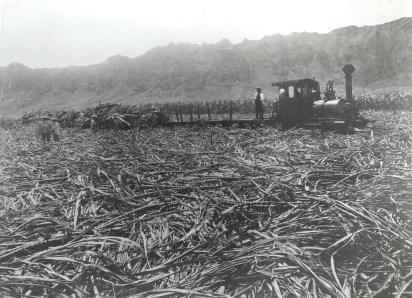Waimanalo Sugar Plantation c1890s