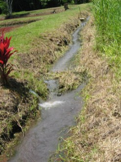 Water from the 'auwai going back to the kahawai-(KSBE)