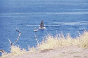 Ukumehame & McGregor Point