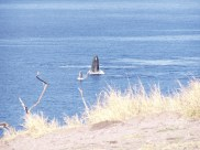 Whales from McGregor Point-(cphamrah)