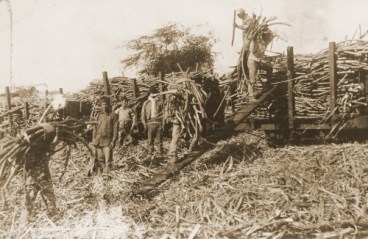 Workers loading sugar cane-1905-BM