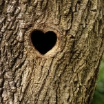 adventure-journal-hearts-in-nature-bird-hole-SS